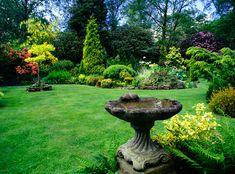 Madárbarát kert, díszkert
