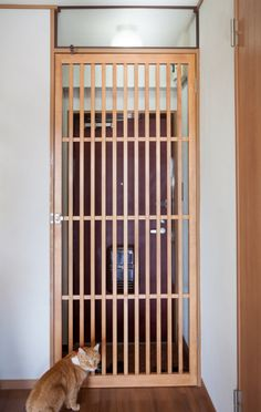 Joyful Cat Room Ideas: Decorative & Safe Designs - Home & Garden: Inspiring Interior, Outdoor and DIY Ideas Cat Gate, Cat Fence, Tall Pet Gate, Living With Cats, Cat Playground, Cat Room, Animal Projects, Pet Store, Animals And Pets
