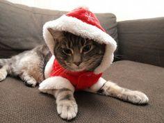 Adorable Kittens in Santa Hats! Cutest Kittens Ever, Adorable Kittens, Cute Bunny, Santa Hat, Xmas, Christmas, Spirit, Hoodie, Animals