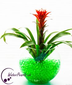 Unsere grünen Waterpearls mit einer schönen Bromelia Blume kombiniert.