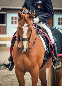 Equine Photography: halted | Flickr - Photo Sharing!