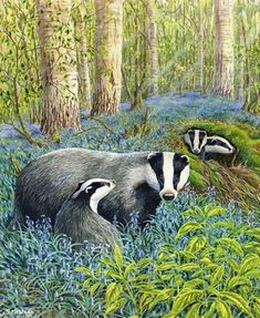 Badgers in bluebells - unknown artist British Wildlife, Wildlife Art, Animal Paintings, Animal Drawings, Badger Illustration, Animals Beautiful, Cute Animals, Honey Badger, Animal Magic