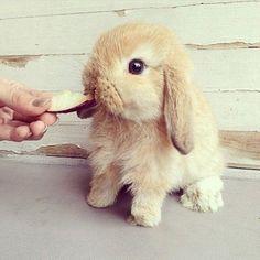 Way too cute to handle.