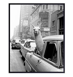 New York City Photograph - Llama in NYC Taxi Wall Art Photo - 8x10 Picture Print - Gift for New Yorker, NY, Big Apple, Manhattan Fans - Unframed Poster #lowcountry #AmazonFinds Posters Amazon, Amazon Home Decor, 10 Picture, Print Pictures, New York City, Photo Wall Art, Fine Art Prints, Nyc, Manhattan