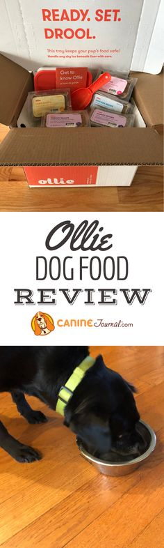 Nutrition Guide, Diet And Nutrition, Human Grade Dog Food, Dog Food Delivery, Dog Food Reviews, Beef Strips, Canned Dog Food, Best Dog Food, Frozen Meals