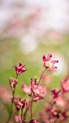 Nature Bokeh Flower Bunch #iPhone #6 #plus #wallpaper