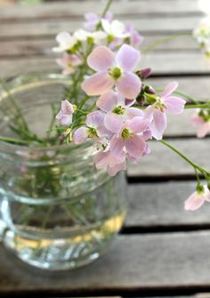 PamyLotta: Friday Flowers 17/14