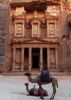 Camels In front of Al Khazneh Treasury ruins, Petra, Jordan.