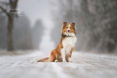 Sable in Grey by Anna Lena Wöhrer - Photo 135311841 - Dream Photography, Animal Photography, Little King, Cool Photos, Corgi, Fox, Poses, Explore, Portrait