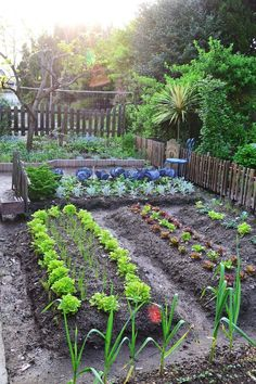 40 Stunning Vegetable Garden Design Ideas Perfect For Beginners – – Gardening for beginners and gardening ideas tips kids Vegetable Garden For Beginners, Backyard Vegetable Gardens, Potager Garden, Veg Garden, Vegetable Garden Design, Fruit Garden, Garden Cottage, Edible Garden, Gardening For Beginners