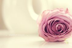 pink roses are my fav Cover Pics For Facebook, Facebook Timeline Covers, Facebook Art, Twitter Cover Photo, Timeline Cover Photos, Single Rose, Fb Covers, Book Covers, Cover Pages