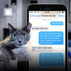 A man texts with his cat to see if he has the parasite that can cause schizophrenia in humans.