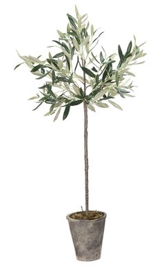 Artificial & Fake Plants Alcott Hill Olive Tree in Pot Potted Olive Tree, Faux Olive Tree, Potted Trees, Indoor Olive Tree, Best Indoor Trees, Olive Plant, Tree Planters, Balcony Planters, Gardens