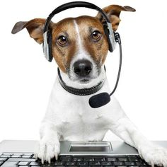 jack russelel honden afbeeldingen | Red Mascota (@RedMascotaMedia) | Twitter
