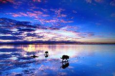 自然が作り出す、人間の創造をはるかに越えた景色の数々を、星野道夫さんを通して観ることができます。