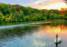 Tucked away from the buzz of the city with the option to go canoeing on the river. Nature View, Ann Arbor, Outdoor Travel, Canoe, The Great Outdoors, Waterfall, To Go, Around The Worlds, River