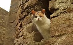 Daily Cute: This Blind Cat Climbed a Mountain | Care2 Causes