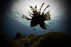 I Left My Comfort Zone And Started Photographing Underwater Life | Bored Panda