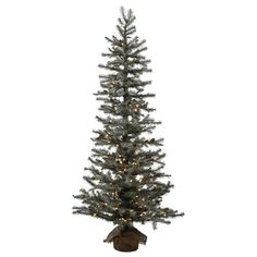 Vickerman Co. Frosted Pistol 3' Pine Tree Artificial Christmas Tree with 50 Clear Lights