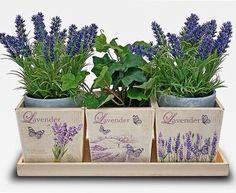 Herb setting--