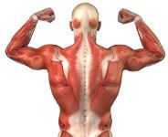 Upper Crossed Syndrome: 4 Steps to Correct Rounded Shoulders and Hunchback Posture