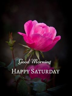 Good Morning Flowers, Beautiful Morning, Good Morning Images, Happy Weekend Quotes, Saturday Quotes, Good Morning Happy Saturday, Beautiful Flowers, Blessed, Inspirational Quotes