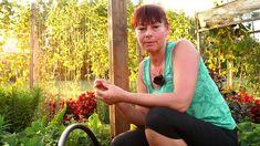Cum plantăm și îngrijin căpșunii Planting Seeds, Fruit Trees, Herb Garden, Grape Vines, Herbs, Youtube, Gardening, Container Gardening, Agriculture