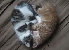 14 chats se préparant secrètement pour la Saint-Valentin | ipnoze