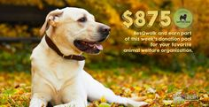 New week, new donation pool!  Lace up, keep warm, and #walk4animals! http://www.resqwalk.com