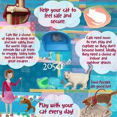 Cat care tips for kids #kidsbooks #infographic #ethicalchildrensbook #humaneeducation #animalwelfare #animallover #booksforkids #booksandnature #catstagram #catwelfare #catsprotection #teachersofinstagram #teachkindness #teachersfollowteachers #fiveneedsofanimalwelfare #animalbooks #socent #dogood #solutionarygeneration #infographicsforteachers #catcare #catfacts