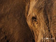 The eyes are the window to the soul. African Elephant - Botswana Photograph by Steven Stockhall