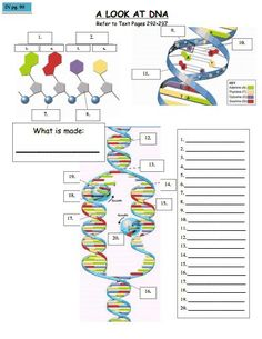 DNA Doctor - Printable 7th grade science worksheet | High School ...