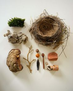moss, shelf fungus, birdnest and other collected goodies.  by Camilla Engman