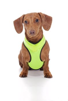 cb17348778 Stay safe and bright at night and never lose your dog again! Available in 5  sizes on Amazon.  )