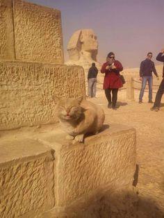 私がピラミッドの管理人です