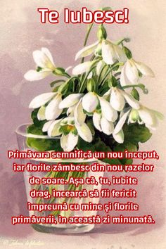Primăvara semnifică un nou început, iar florile zâmbesc din nou razelor de soare. Așa că, tu, iubite drag, încearcă să fii fericit împreună cu mine și florile primăverii, în această zi minunată. Beautiful Flowers Pictures, Flower Pictures, 8 Martie, Flower Arrangements, Happy Birthday, Merry, Spring, Plants, Emoticon