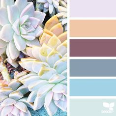 today's inspiration image for { succulent hues } is by @traceybolton ... thank you, Tracey, for another amazing #SeedsColor image share!