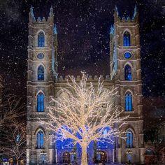 L'arbre de Noël de la Basilique Notre-Dame