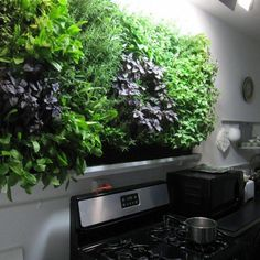 A Few Effective Tips For Container Gardening Indoor gardening is a fun way to add to the visual attraction of your home. You can use the terrific suggestions given here to start improving your garden or begin a new one today. Your ga Planting Bulbs In Spring, Garden Renovation Ideas, Garden Solutions, Long Walls, Modern Canvas Art, Garden Journal, Herbs Indoors, Landscape Walls, Pergola Designs