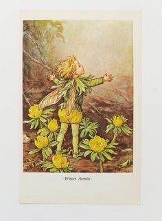 Winter Aconite Fairy  Fairy Picture Flower by PeonyandThistlePaper