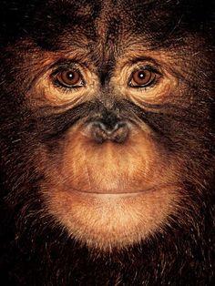 James Molisson. Apes. Fantastische foto's!