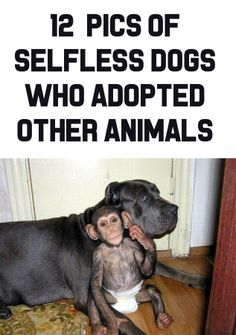 OMG, the very first pic is probably the sweetest thing I've ever seen! http://theilovedogssite.com/12-photos-of-selfless-dogs-who-adopted-other-animals/