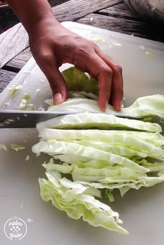 Love Cabbage? Preserve your harvest of by freezing. Also, grab a quick and easy recipe for Fried Cabbage with Bacon to enjoy as a side dish for dinner.