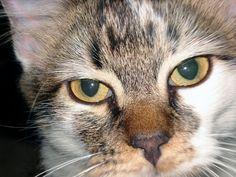 Cats / Katzen / Кошки