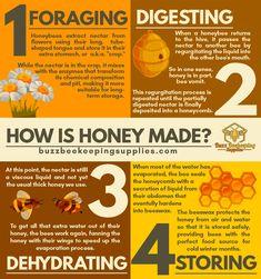 How Bees Make Honey, Honey Bees, Black Honey, Raw Honey, Honey Bee Facts, Beekeeping Supplies, Bee Products, Bee Hive Plans, Garden Bugs