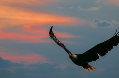Flying under sunset by Jay Z on 500px, 98.9