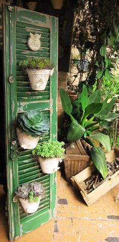 Vertical gardens have become fashionable and the truth is that we love them. A very clever way to enjoy the greenery inside and outside the house, saving the space. Here are some amazing vertical garden ideas to start with! Green Shutters, Old Shutters, Repurposed Shutters, Yard Art, Cactus Y Suculentas, Old Doors, Front Doors, Vertical Gardens, Succulents Garden