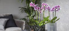 Slik lykkes du med orkidé   Stelletips fra Mester Grønn Plants, Yoga, Plant, Planets