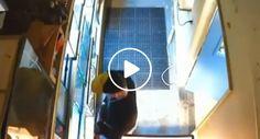 Homem Rouba Piton De Loja De Animais e Esconde-a Dentro Das Próprias Calças