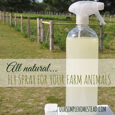 All Natural Fly Spray for Farm Animals - I have tried a few different fly sprays over the years, and was shocked at the list of ingredients that they are loaded with. Things I would never dream of putting on or near my body, let alone sprayed daily on our animals.